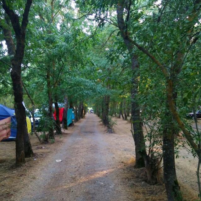 Палаточный городок в лесополосе на берегу