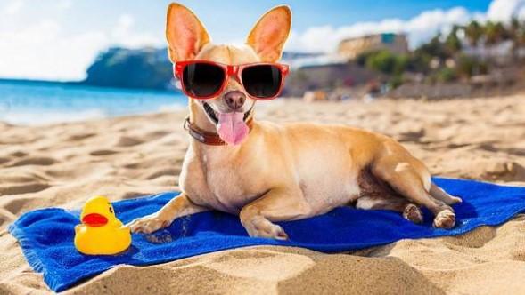 отдых с животными летом