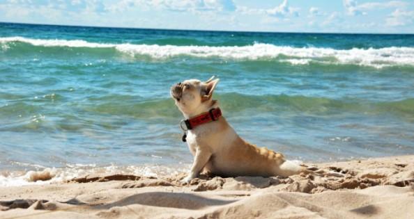 отдых на море с собакой Одесская область